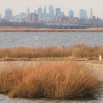 Jamaica Bay resilience modeling